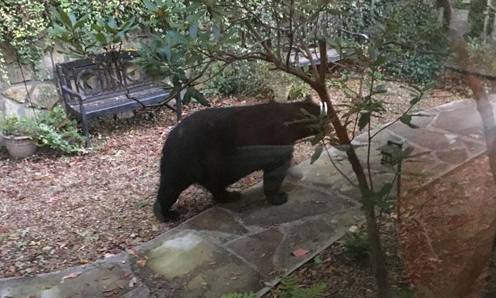 bear-oct-2017
